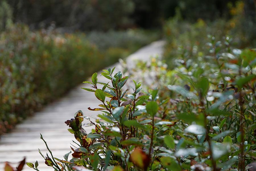 Wandern Schwarzwald - A Tasty Hike - Wanderweg mit Pflanzen Titel