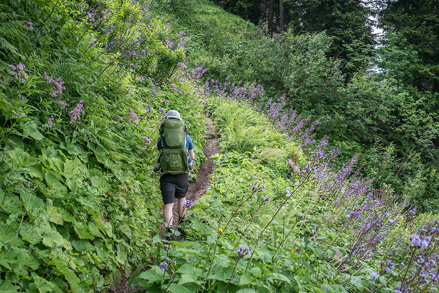 Bad Hindelang wandern - Wanderung zum Imberger Horn im Allgaeu - A Tasty Hike - Aufstieg durch Pflazen