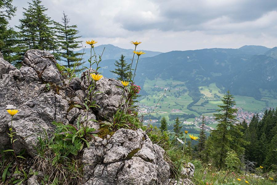 Bad Hindelang wandern - Wanderung zum Imberger Horn im Allgaeu - A Tasty Hike - Gestein