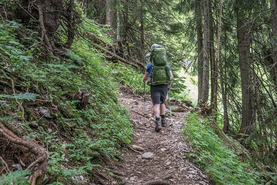 Bad Hindelang wandern - Wanderung zum Imberger Horn im Allgaeu - A Tasty Hike - Wald