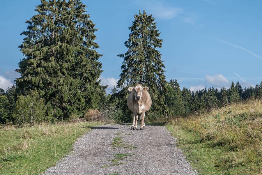 A Tasty Hike Jahresrueckblick 2018 - Salmaser Hoehe Allgaeu