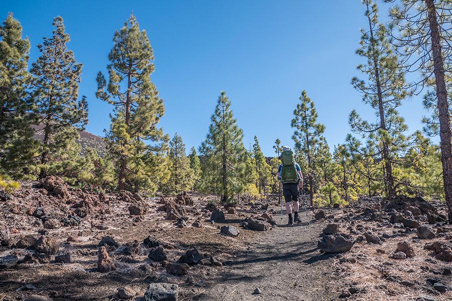 A Tasty Hike - Wandern auf Teneriffa - Montana Samara - Wandern durch kanarisch Kiefern