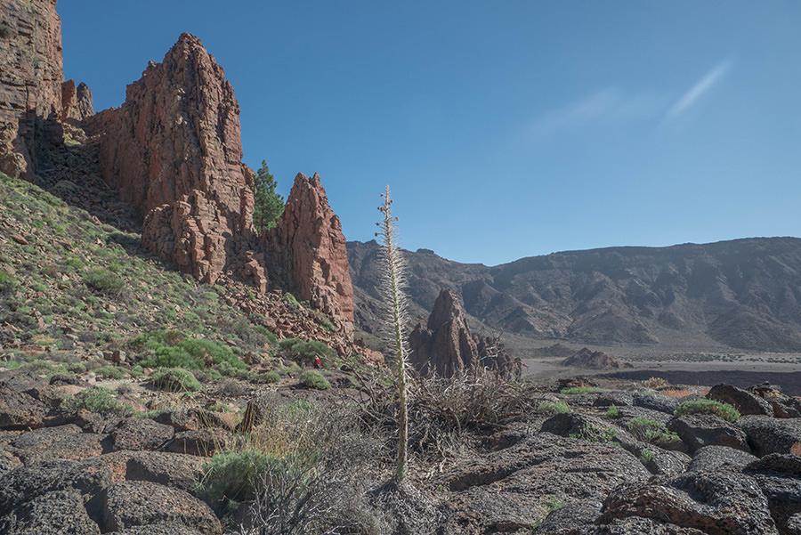 A Tasty Hike - El Teide Gipfel Teneriffa - Wanderung Roques de Garcia - Pflanze