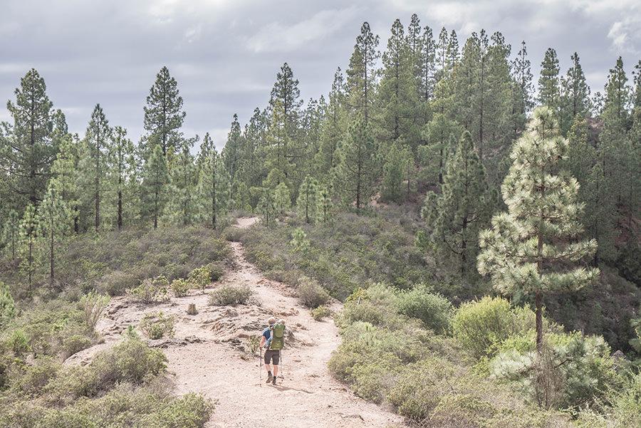 A Tasty Hike - Wanderfuehrer Teneriffa - Kleine Ifonche Runde - Wald