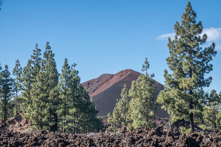 A Tasty Hike - Wandern Teneriffa - Rundwanderung Vulkan Chinyero - Ausblick vom hoechsten Punkt