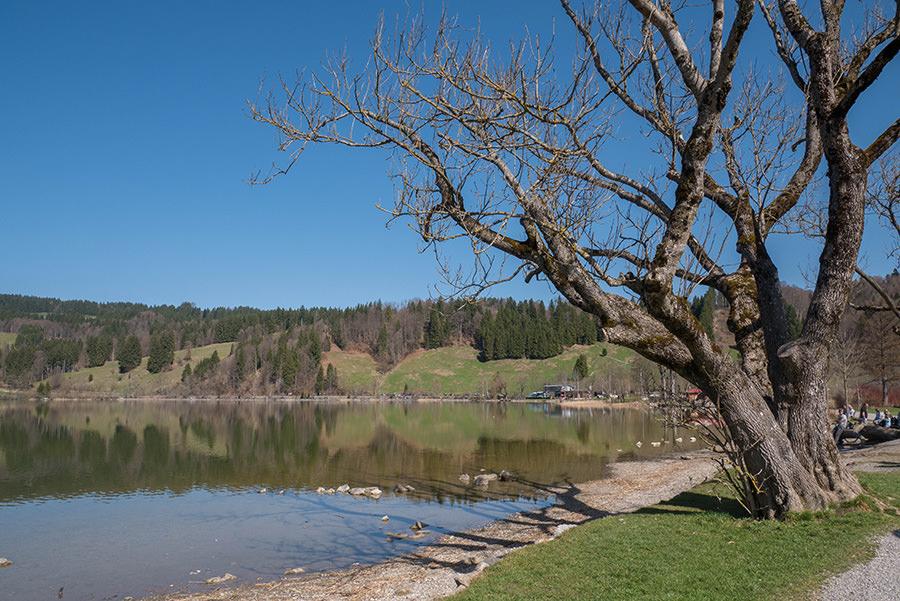 A Tasty Hike Genusswandern Allgäu - Wanderung zur Siedelalpe am Alpsee 1