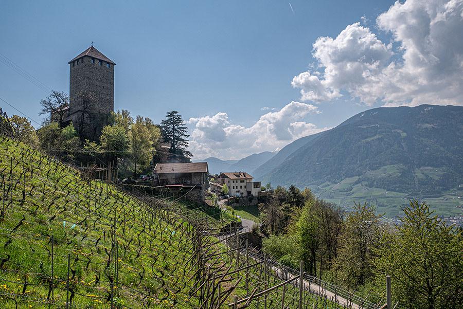 A Tasty Hike - Dorf Tirol Wandern - Suedtirol - Schloss Tirol von unten