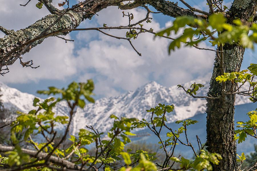 A Tasty Hike - Dorf Tirol Wandern - Suedtirol - Schneegipfel