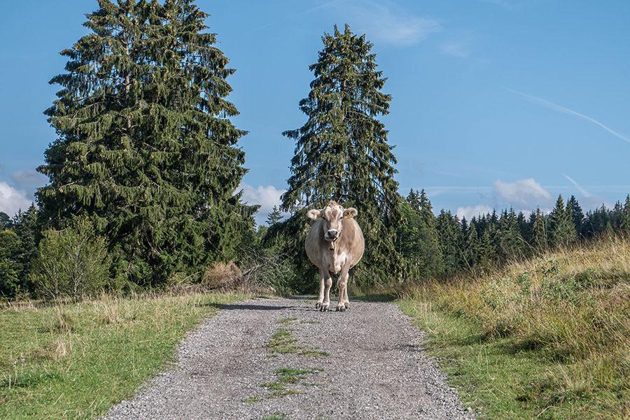 A Tasty Hike - Salmaser Hoehe und Thalerhoehe - Allgaeu - 17