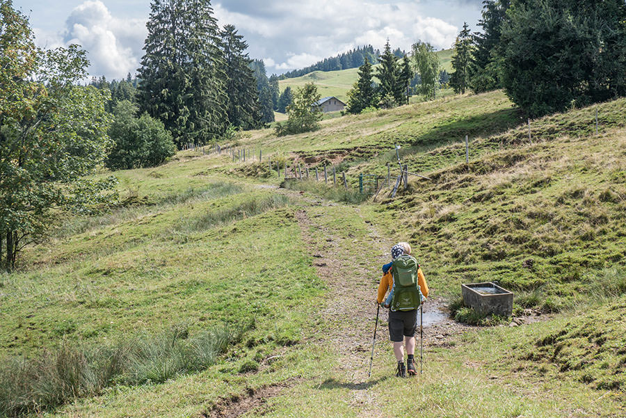 A Tasty Hike - Salmaser Hoehe und Thalerhoehe - Allgaeu