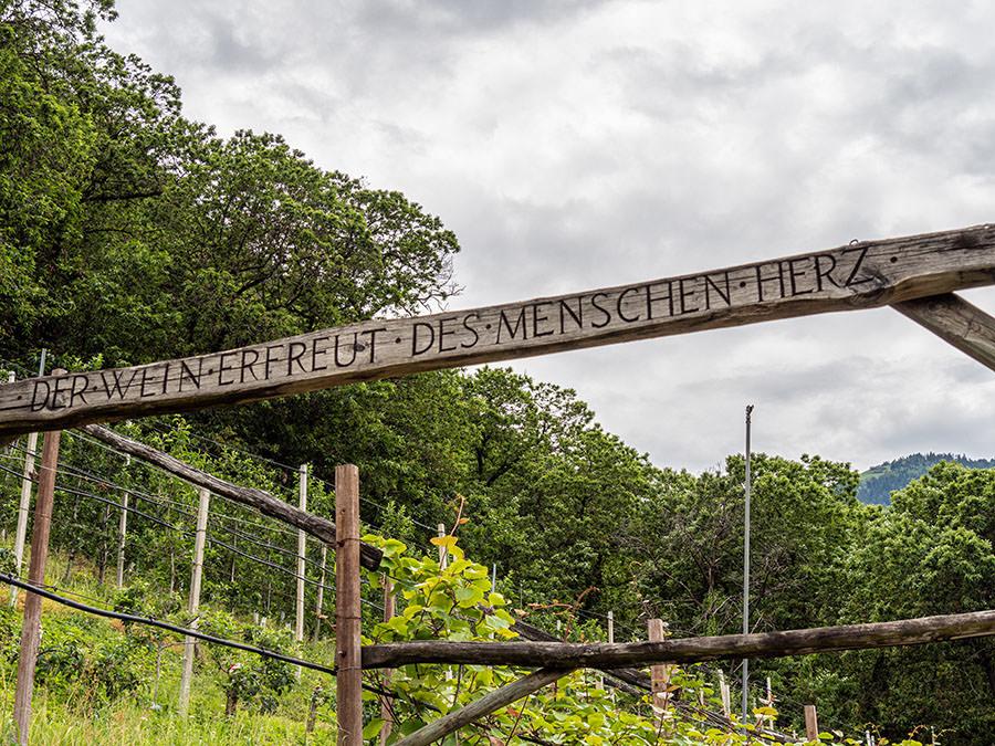 A Tasty Hike - Waalweg Lana - Suedtirol - Brandiswaalweg - Spruch