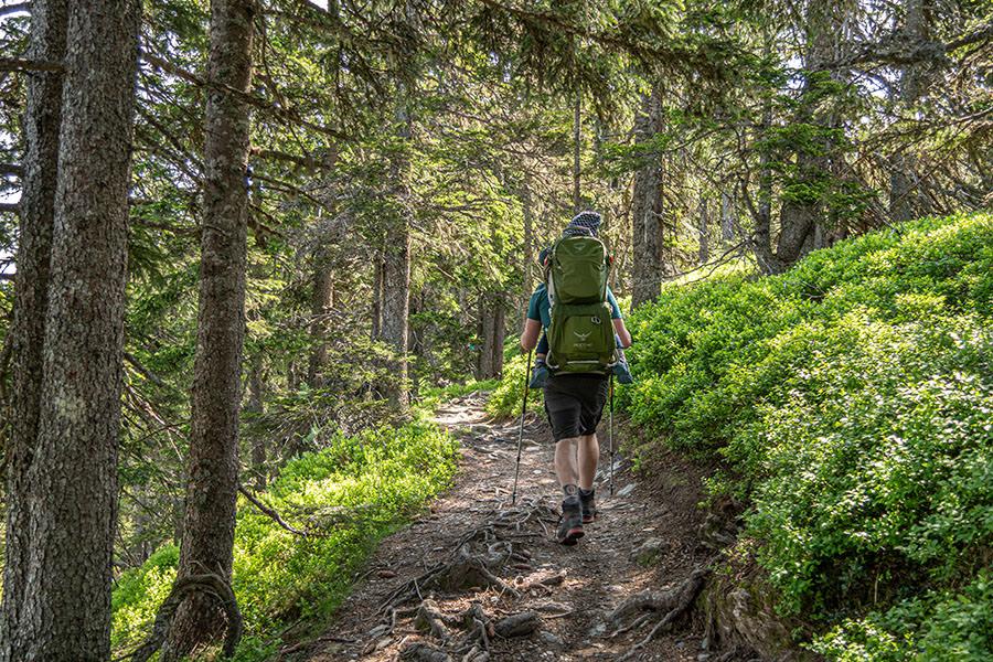 Saalbach Hinterglemm Sommer - Wanderung vom Kohlmaiskopf zur Wildenkarhuette - A Tasty Hike - Wald