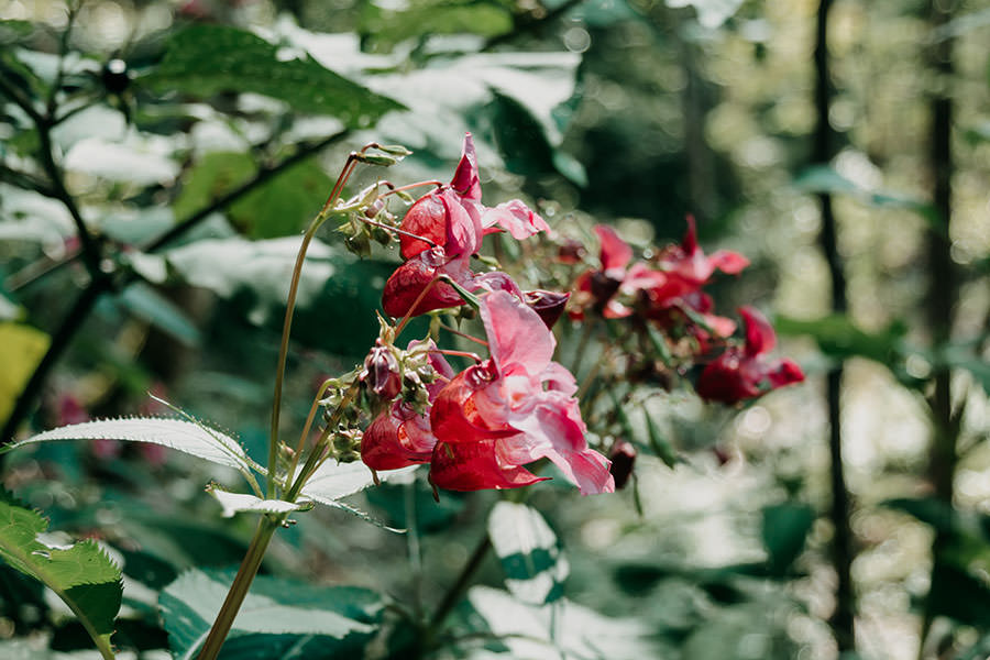 A Tasty Hike - Gruenten Wandern - Lustiger Wanderweg Allgaeu - Blume