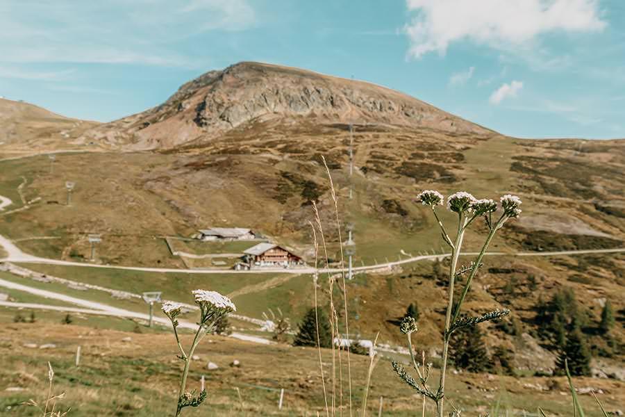 A Tasty Hike - Meran 2000 - Waidmann Alm und Kirchsteiger Alm - Genusswanderung - Blumen mit Kirchsteiger Alm