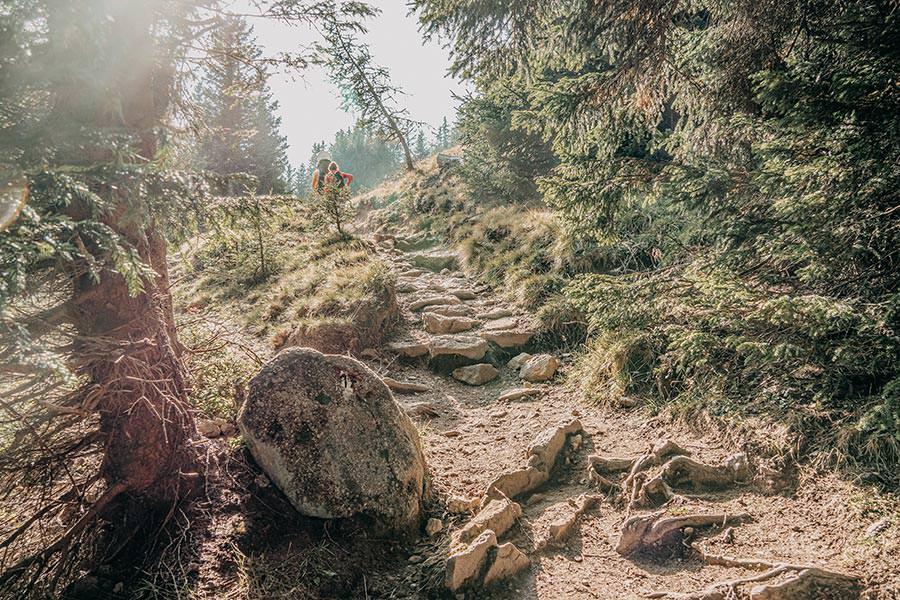 A Tasty Hike - Meran 2000 - Waidmann Alm und Kirchsteiger Alm - Genusswanderung - Rueckweg