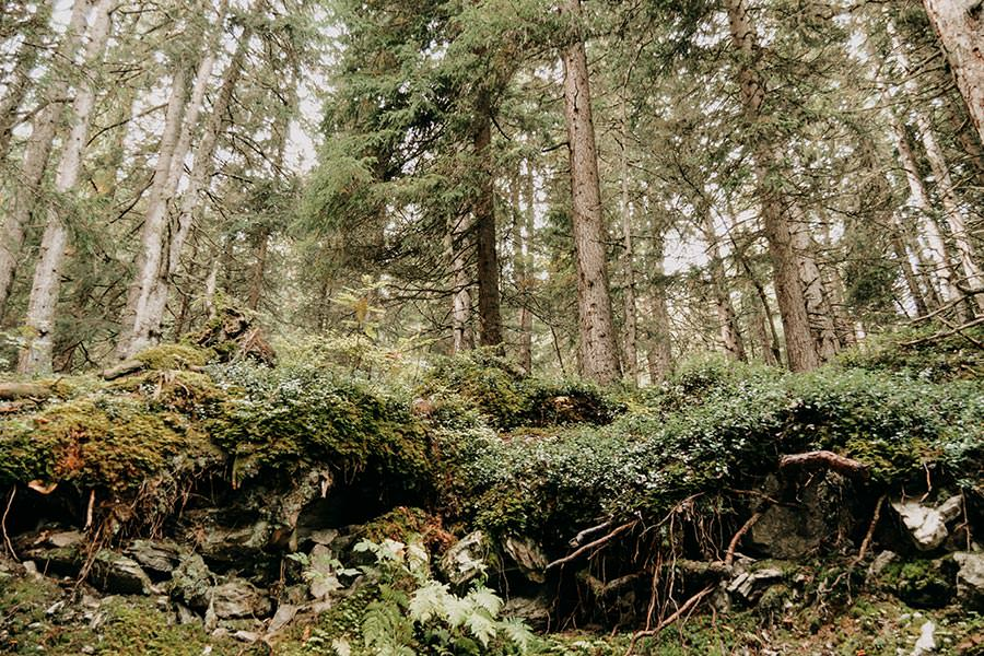 A Tasty Hike - Serfaus Wandern - Panorama Genussweg - Wald