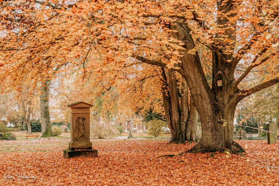 Tagesausfluege Hessen - Secret Places in Hessen - Lahntal - Alter Friedhof Giessen - Herbststimmung