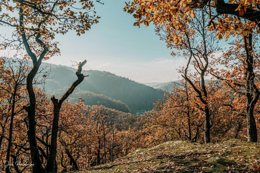 Tagesausfluege Hessen - Secret Places in Hessen - Taunus - Wisper Trails - Dickschieder Wildwechsel - Aussicht Geroldsteiner Tor