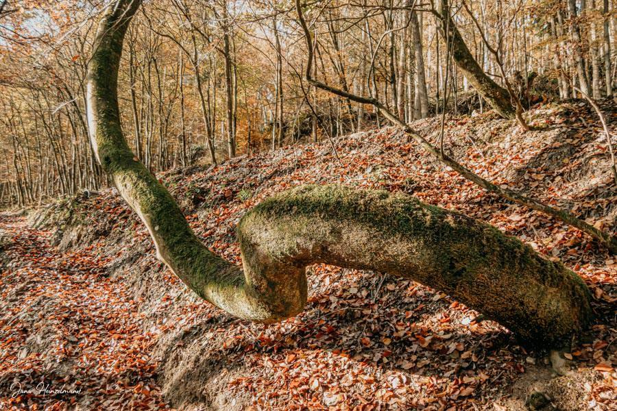 Tagesausfluege Hessen - Secret Places in Hessen - Taunus - Wisper Trails - Dickschieder Wildwechsel - Baumschaukel
