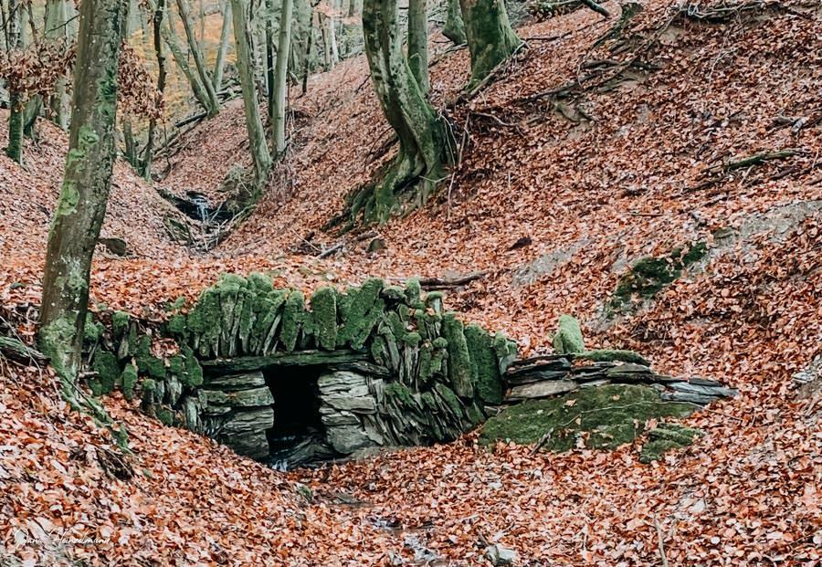 Tagesausfluege Hessen - Secret Places in Hessen - Taunus - Wisper Trails - Dickschieder Wildwechsel - Bruecke