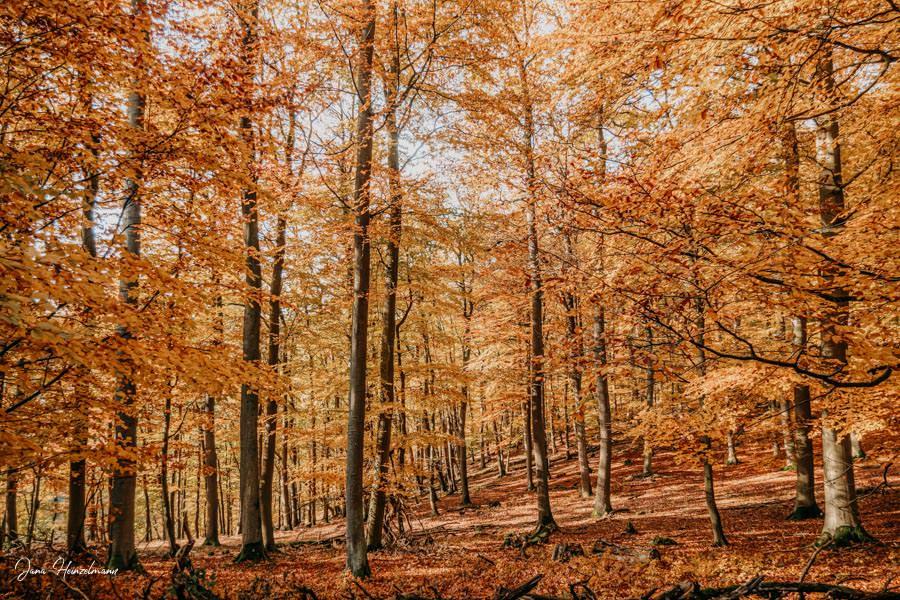 Tagesausfluege Hessen - Secret Places in Hessen - Taunus - Wisper Trails - Dickschieder Wildwechsel - Herbst im Wald