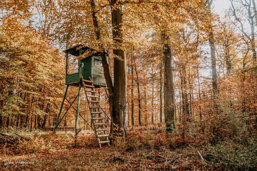 Tagesausfluege Hessen - Secret Places in Hessen - Taunus - Wisper Trails - Dickschieder Wildwechsel - Jaegerstand