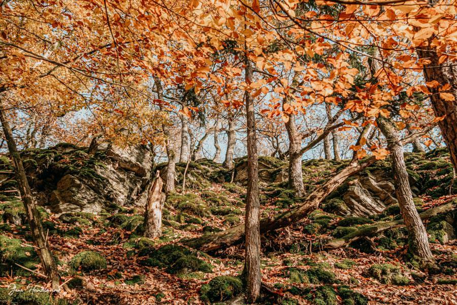 Tagesausfluege Hessen - Secret Places in Hessen - Taunus - Wisper Trails - Dickschieder Wildwechsel - Wald im herbst