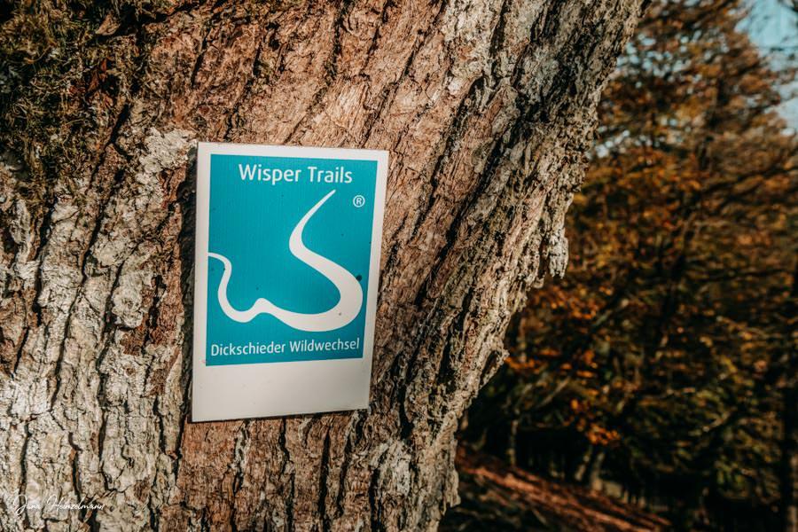 Tagesausfluege Hessen - Secret Places in Hessen - Taunus - Wisper Trails - Dickschieder Wildwechsel