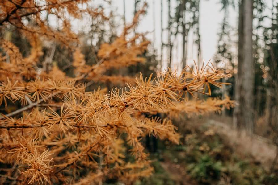 Edersee wandern - Rundwanderung im Nationalpark Kellerwald-Edersee auf dem Urwaldsteig - Herbst