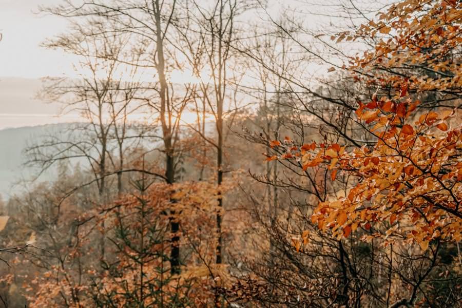 Edersee wandern - Rundwanderung im Nationalpark Kellerwald-Edersee auf dem Urwaldsteig - Herbstfarben