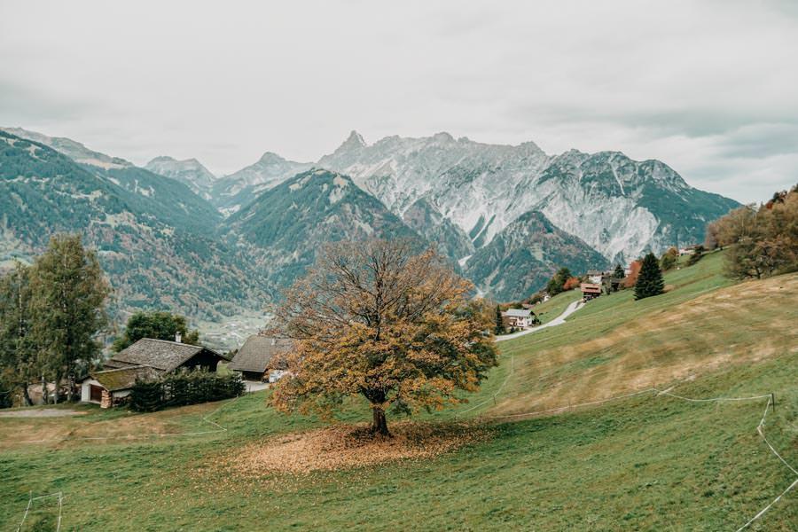 Gefuehrte Wanderungen - sinnvoll oder nicht - Wanderung zum Monteneu im Montafon Baum