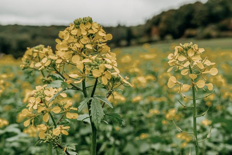 Spessart Wandern Spessartspur Merneser Jossatal - Blumen