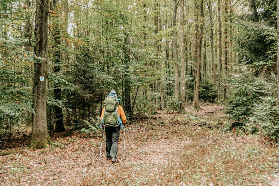 Spessart Wandern Spessartspur Merneser Jossatal - Christian im Wald