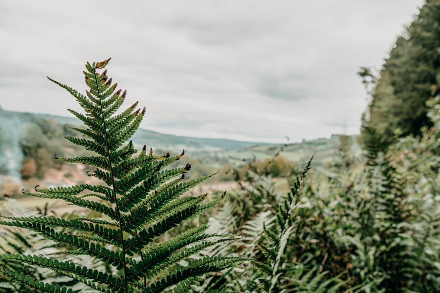Spessart Wandern Spessartspur Merneser Jossatal - Pflanzen