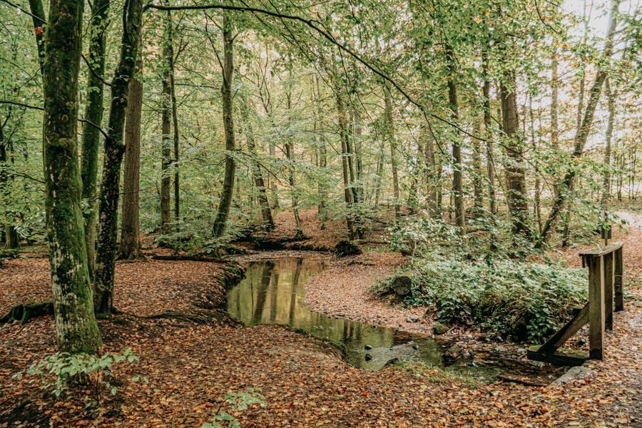 Spessart Wandern Spessartspur Wildromantische HIrschbornteiche - Bach
