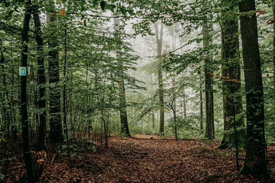 Spessart Wandern Spessartspur Wildromantische HIrschbornteiche - Wald