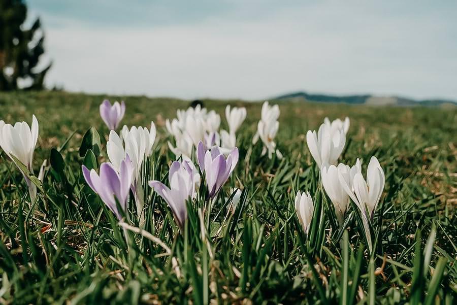 5 genussvolle Frühlingswanderungen in den Alpen & 6 gute Gründe fürs Wandern im Frühling