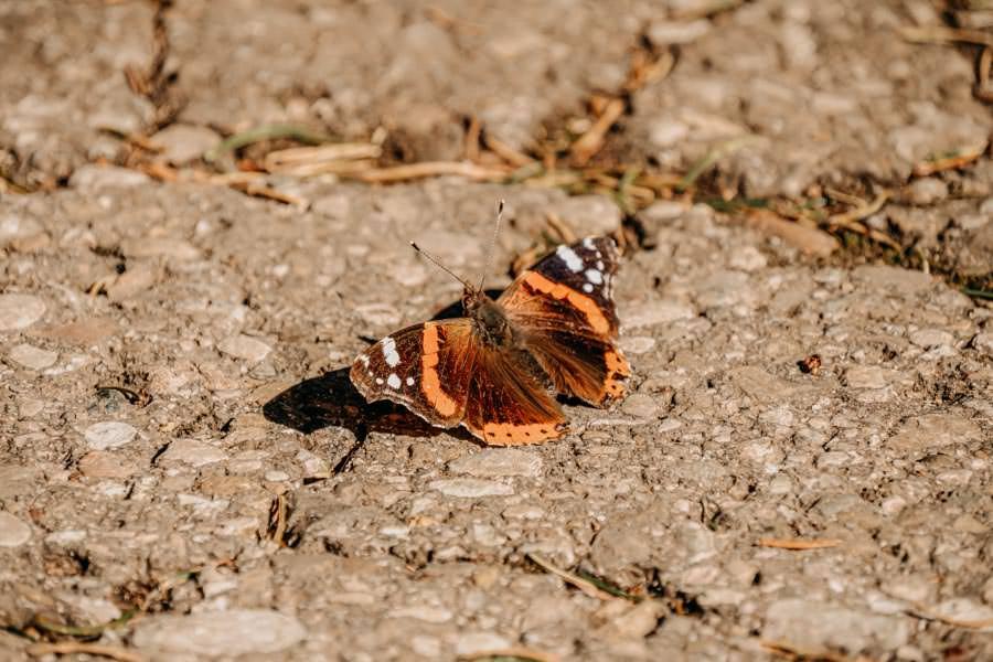 Adelegg Wanderung Kreuzthal – Ulmertal – Schmetterling