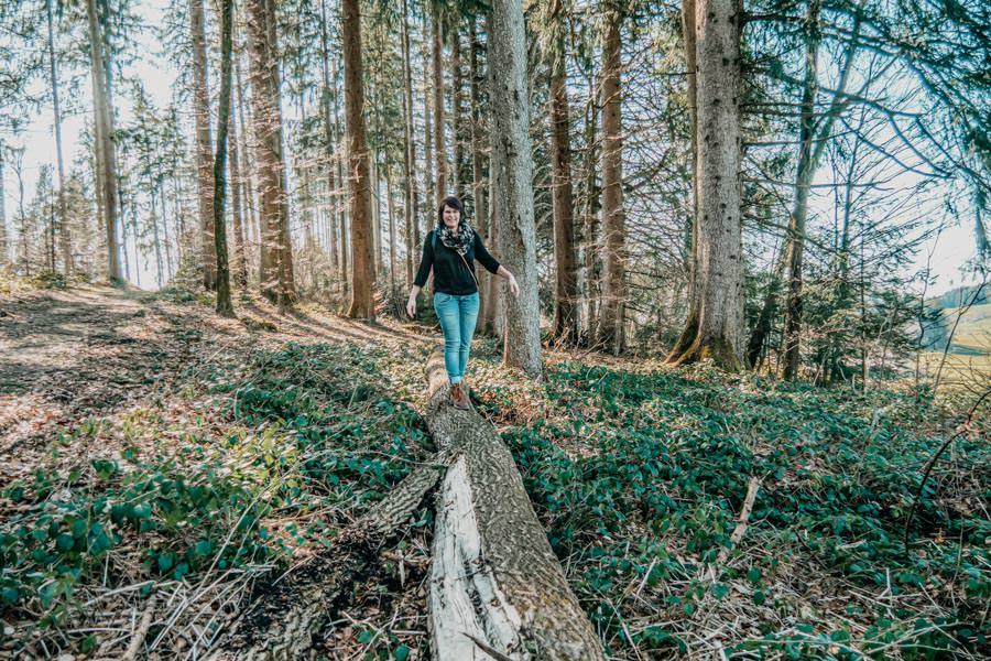 Isny Wandern - gemuetliche Runde zum Herbisweiher bei Isny im Allgaeu - Baumstamm