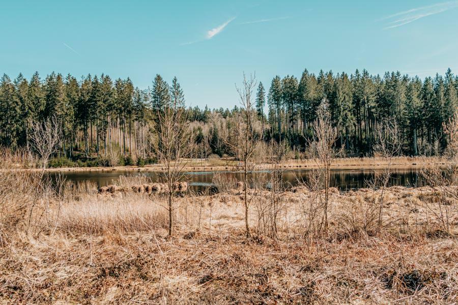 Isny Wandern - gemuetliche Runde zum Herbisweiher bei Isny im Allgaeu - Weiher Umland