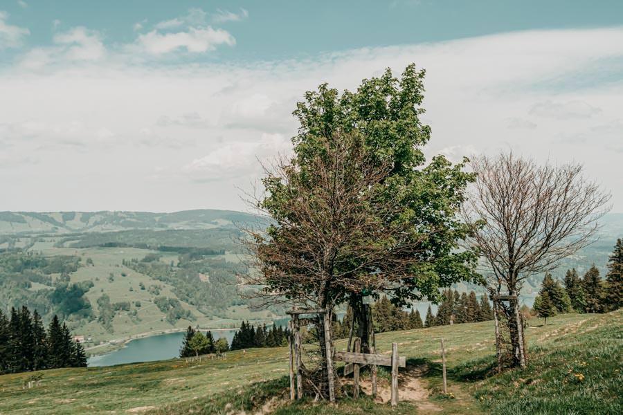 Immenstadt Wandern – Gschwendner Horn – Baeume