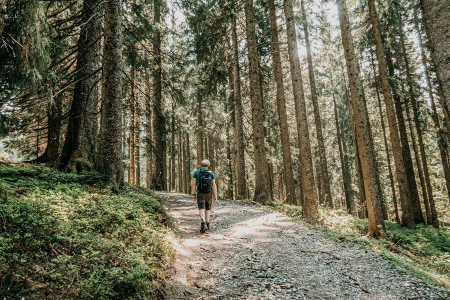 Immenstadt Wandern – Gschwendner Horn – Wald bergauf