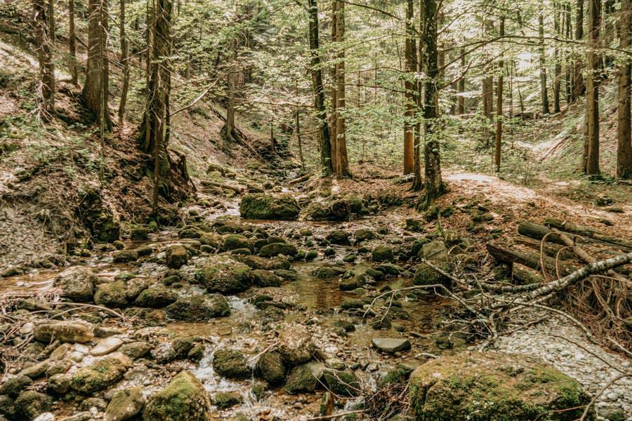 Immenstadt Wandern – Gschwendner Horn – Wald