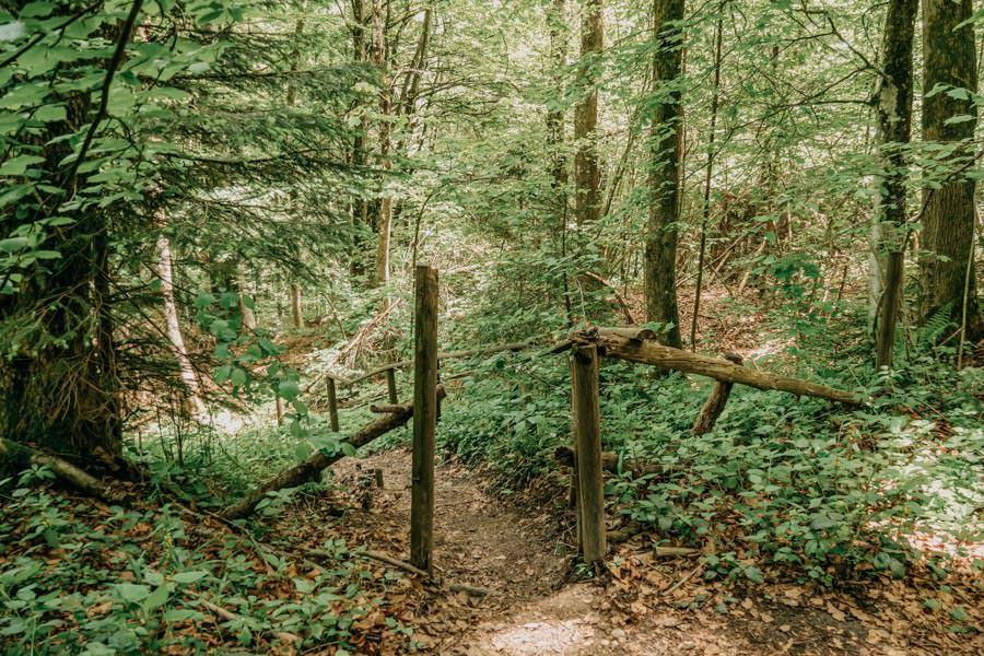 Schwarzer Grat Wanderung Waldweg