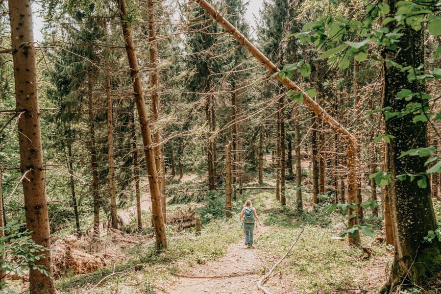 Schwarzer Grat Wanderung Wurzelweg mit Baeumen