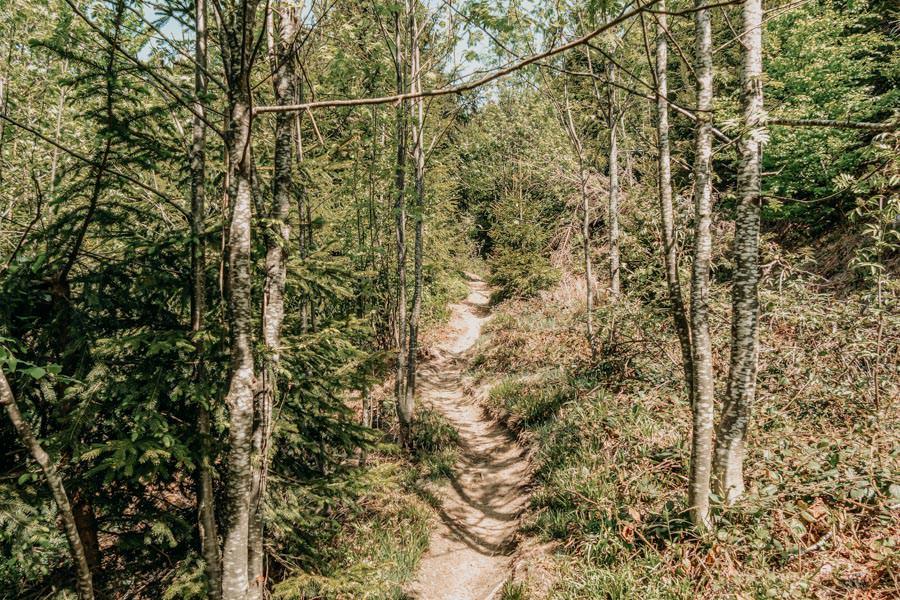 Schwarzer Grat Wanderung Wurzelweg