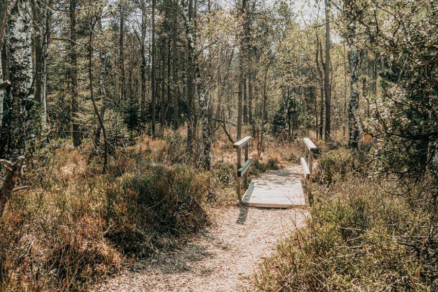 Wanderung Urseen bei Beuren im Allgaeu – Maerchenwald