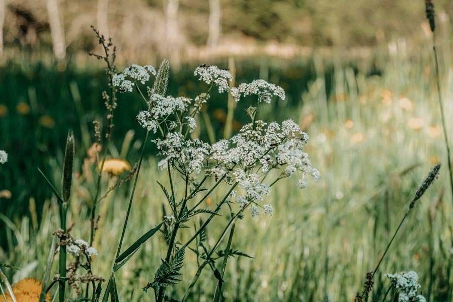 Wanderung Urseen bei Beuren im Allgaeu – Pflanze