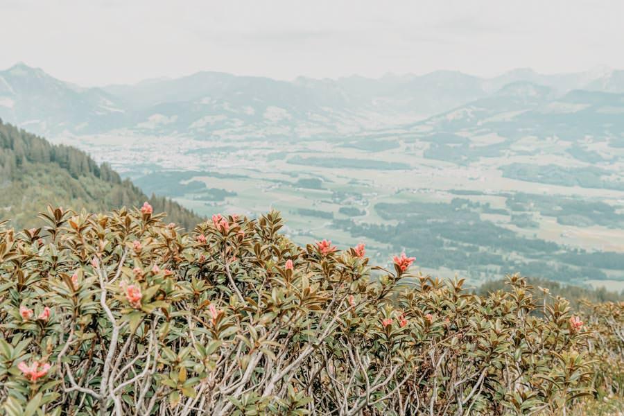Rangiswanger Horn durch den Ostertal Tobel im Allgeau – Bergrosen