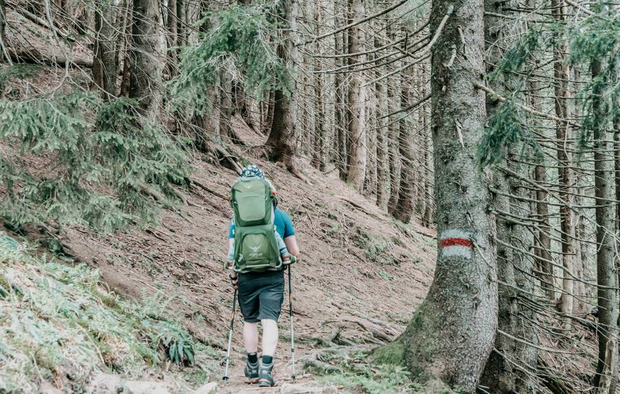 Wanderung Bolsterlanger Horn Allgaeu – Wald